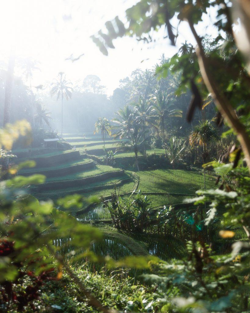 Bali Government